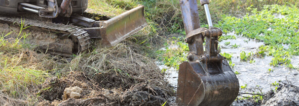 knotweed removal cost