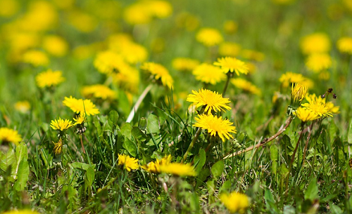 how to remove weeds from large areas