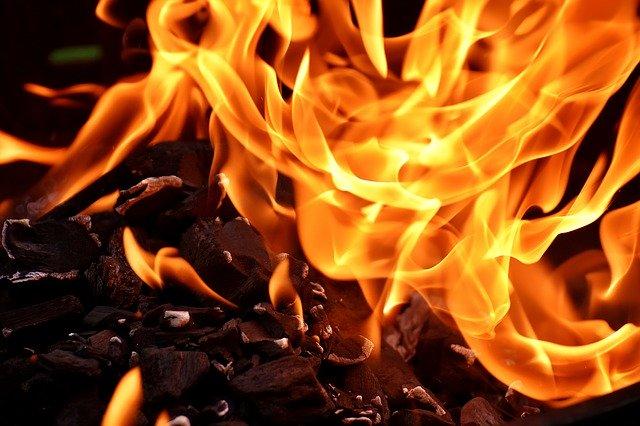Can I Burn Japanese Knotweed