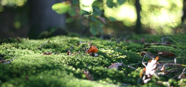 why is moss bad for lawns
