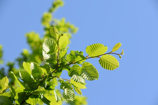 difference between trees and shrubs