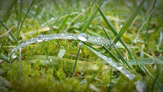is moss dangerous