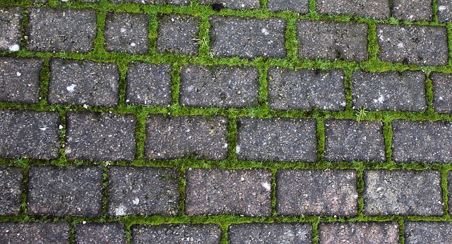 Mossy driveway